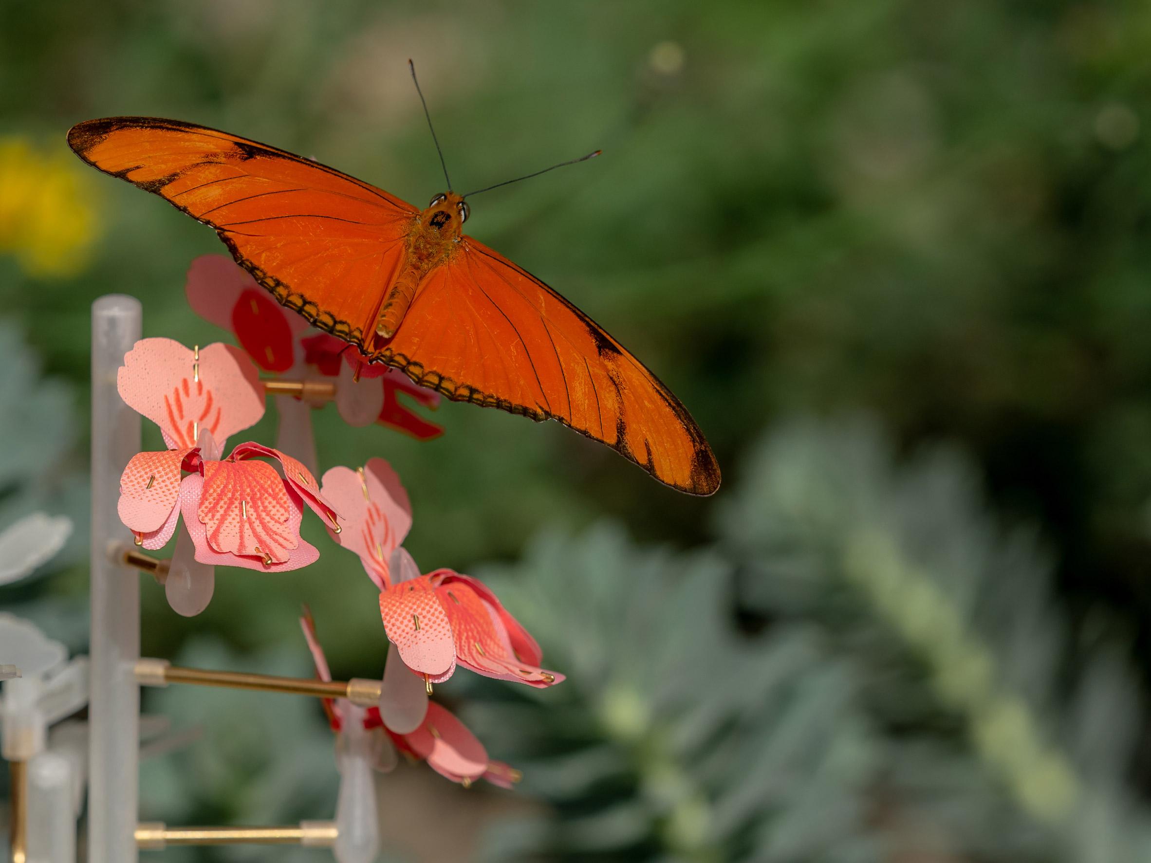 relationship between flowers and pollinators serve