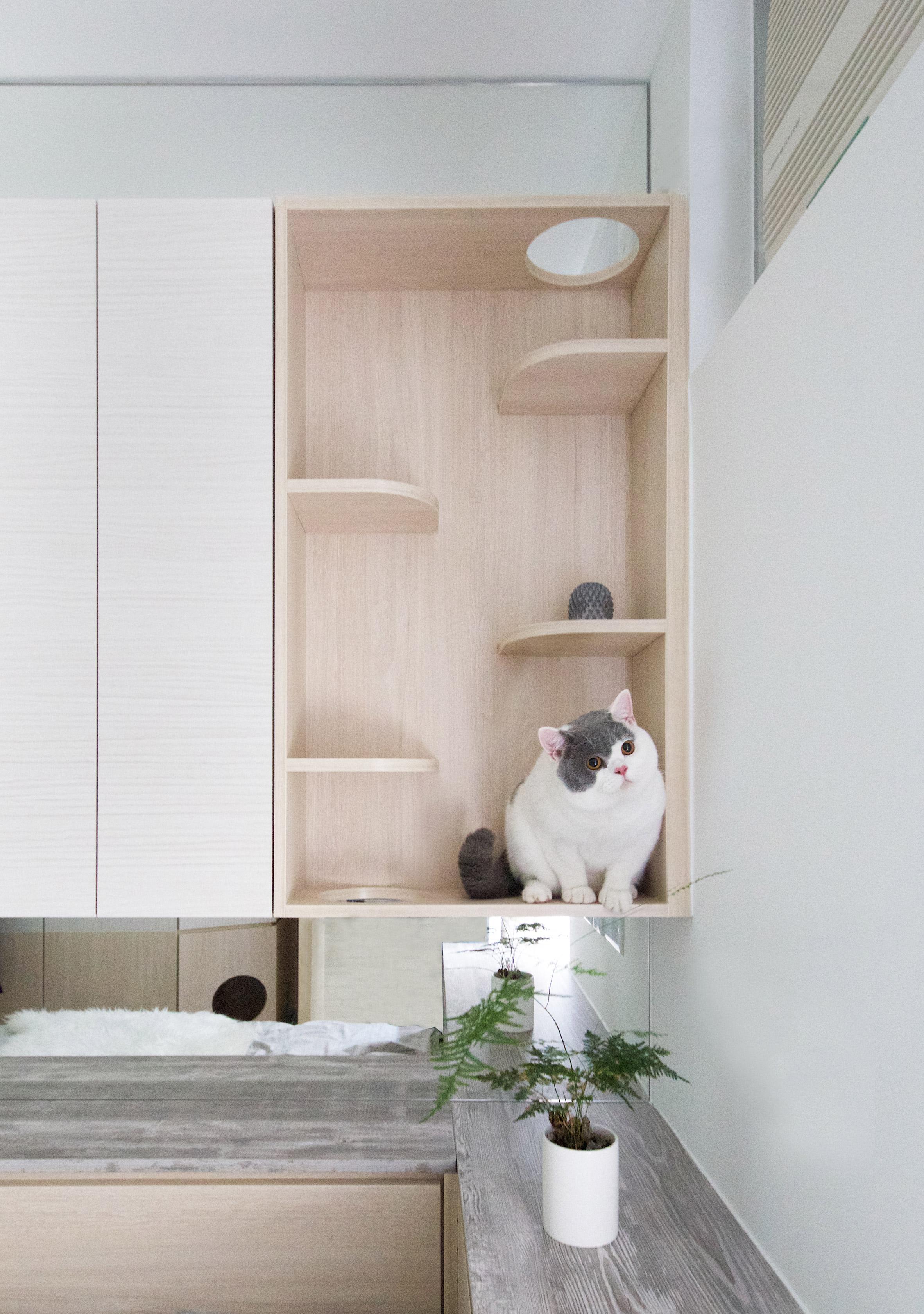 Pets Playground apartment in Hong Kong by Sim-Plex Design Studio