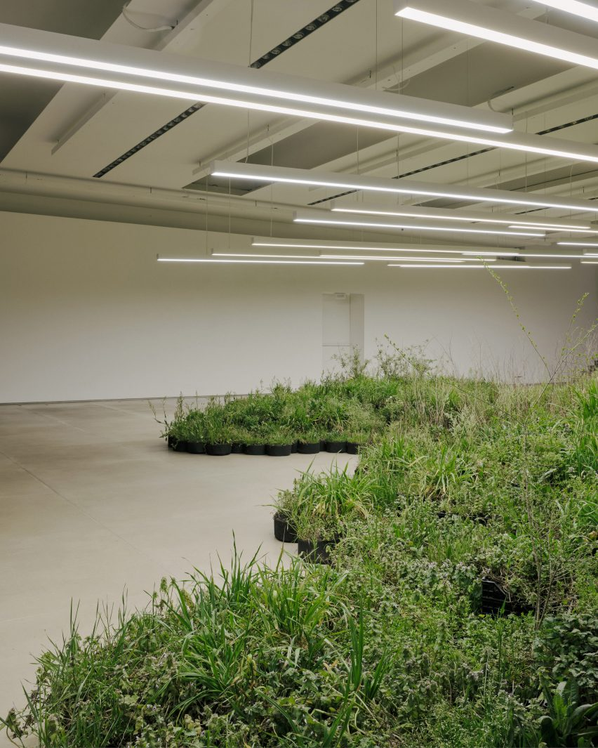 Adjacent Field installation of plants by Linda Tegg at Jil Sander for Milan design week