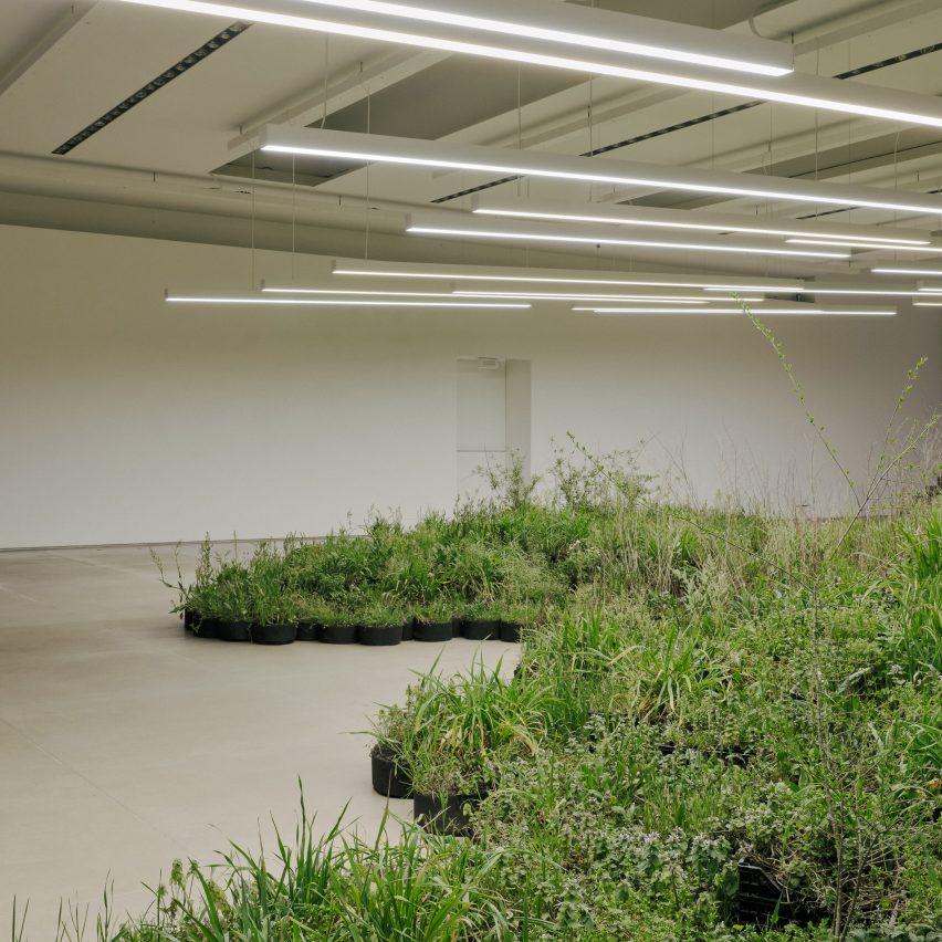 "Linda Tegg fills Jil Sander HQ in Milan with ""spontaneous plants"""