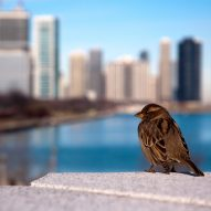 US skyscrapers kill millions of birds a year reports find