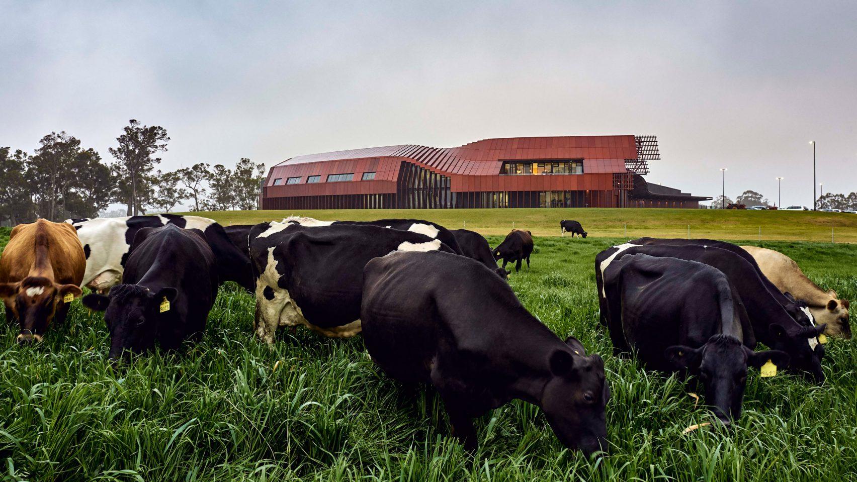 Роботизированный молочный завод в Австралии