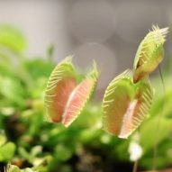 "MIT researchers engineer ""cyborg"" plants for motion-tracking and sending notifications"