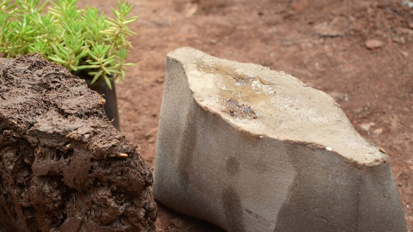 Bricks made from loofah and charcoal could promote biodiversity in cities
