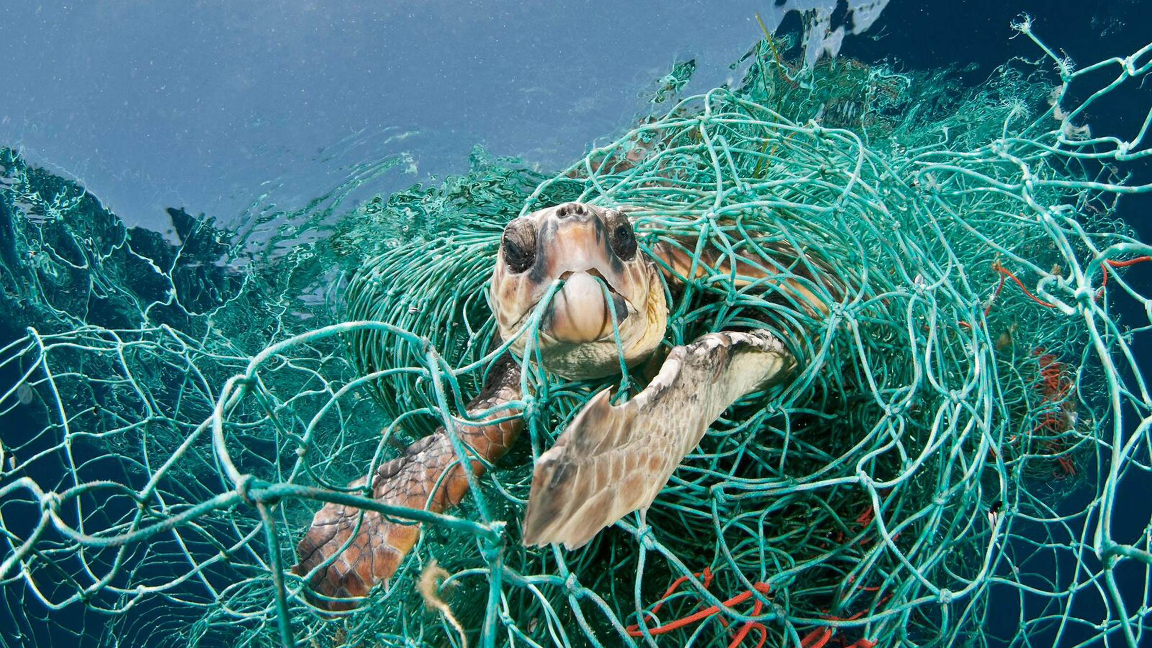 I don't believe we're going to clean up the oceans