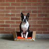 Rocky Brooks' flat-pack rescue dog beds are affordable and recyclable