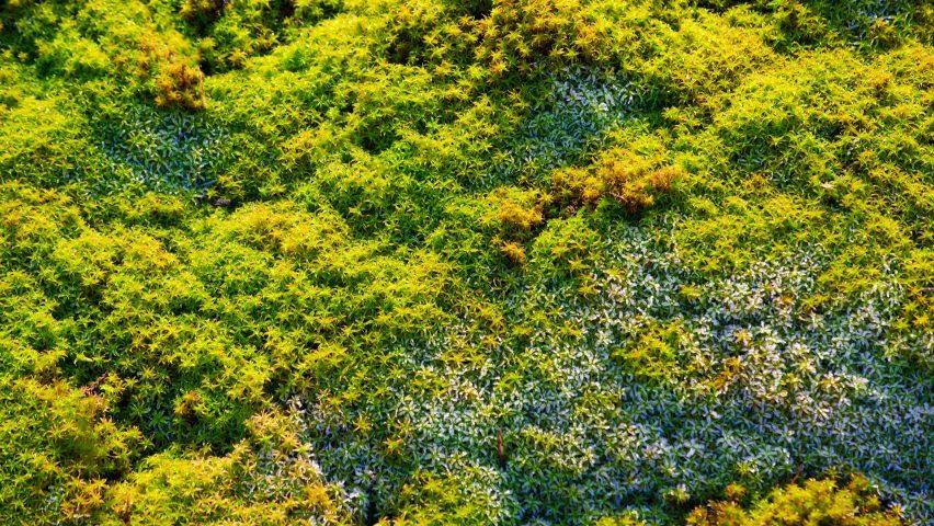 Celine Baumann Parliament of Plants