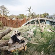 BIG completes yin-and-yang-shaped Panda House at Copenhagen Zoo