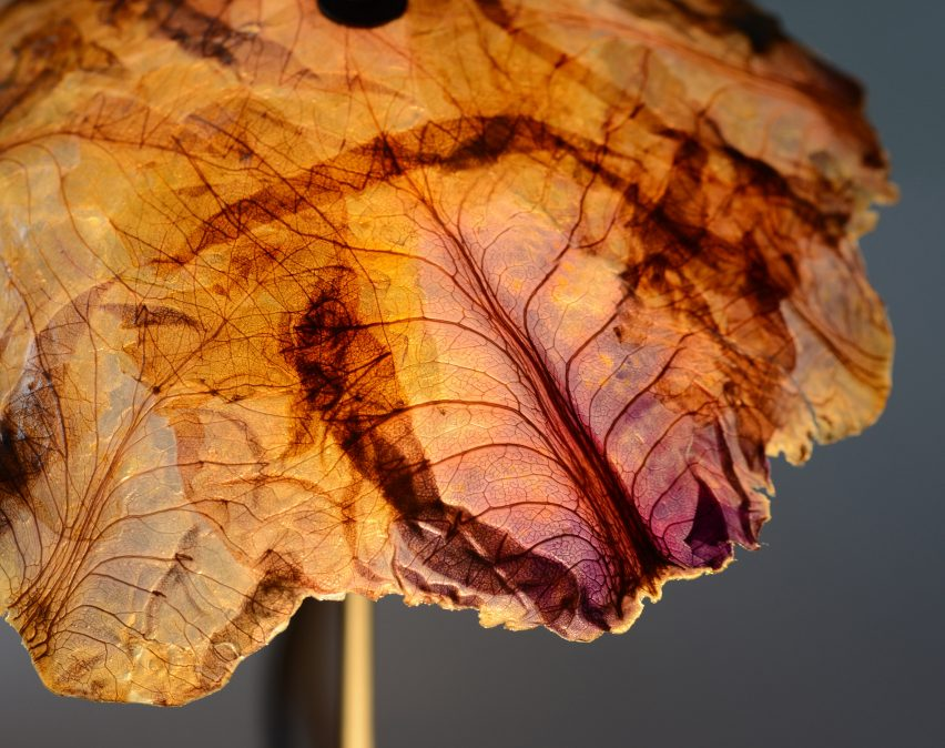 Nir Meiri turns cabbage into Veggie Lights with veiny, paper-like shades
