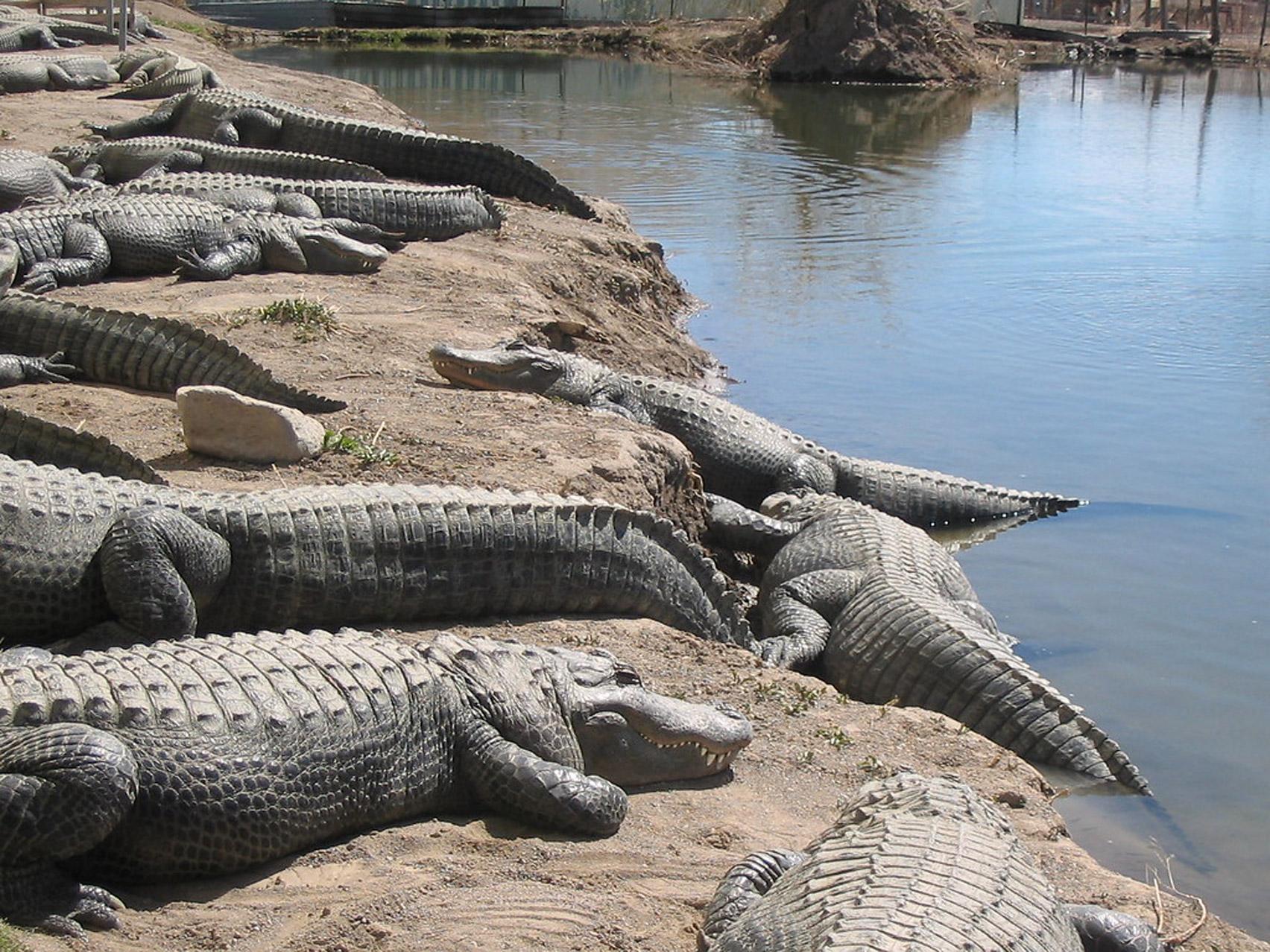 Alligator park in a gas holder by Avanton