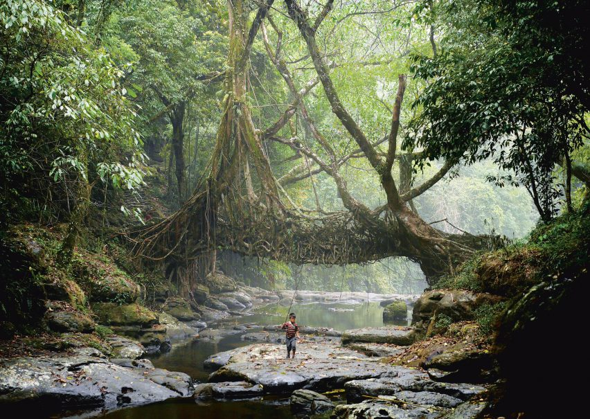 Jingkieng Dieng Jri Living Root Bridges are a system of living ladders and walkways