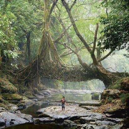 Jingkieng Dieng Jri Living Root Bridges are a system of living ladders and walkways