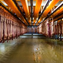 Alastair Philip Wiper, Danish Crown's Horsens Slaughterhouse, Denmark