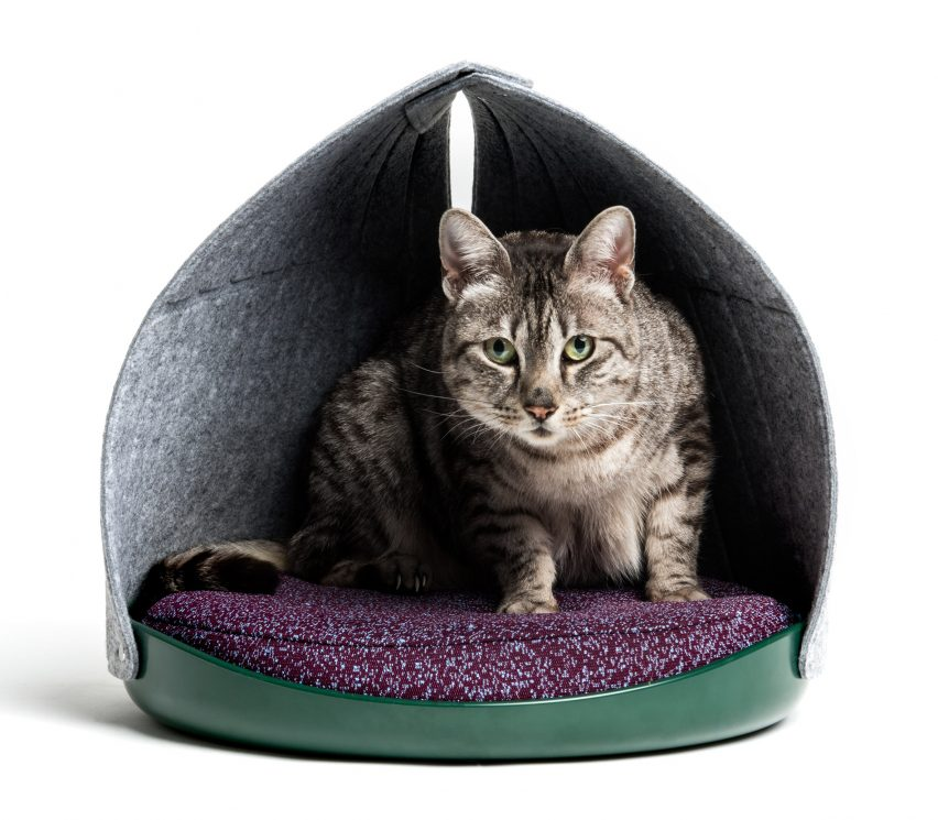 Layer and Cat Person design social media-friendly furniture for felines