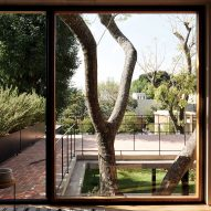 Existing trees left to grow up Guadalajara House by Alejandro Sticotti