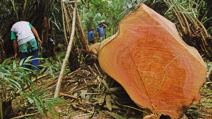 Call for entries to Timber Trade Federation's Conversations about Climate Change competition