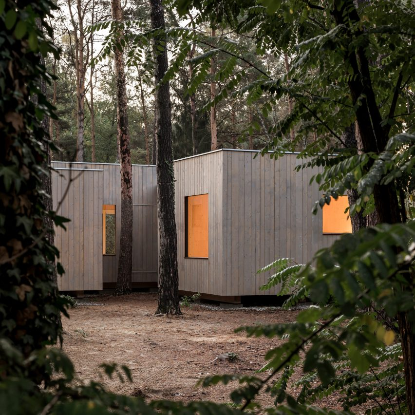 Zeller & Moye arranges timber house around pine trees in German forest