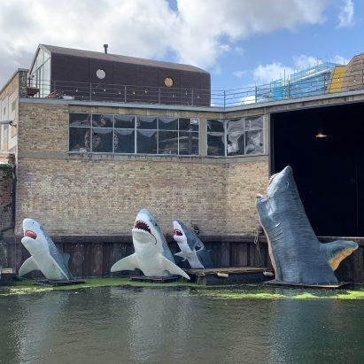 Antepavilion Sharks! by Jamie Shorten