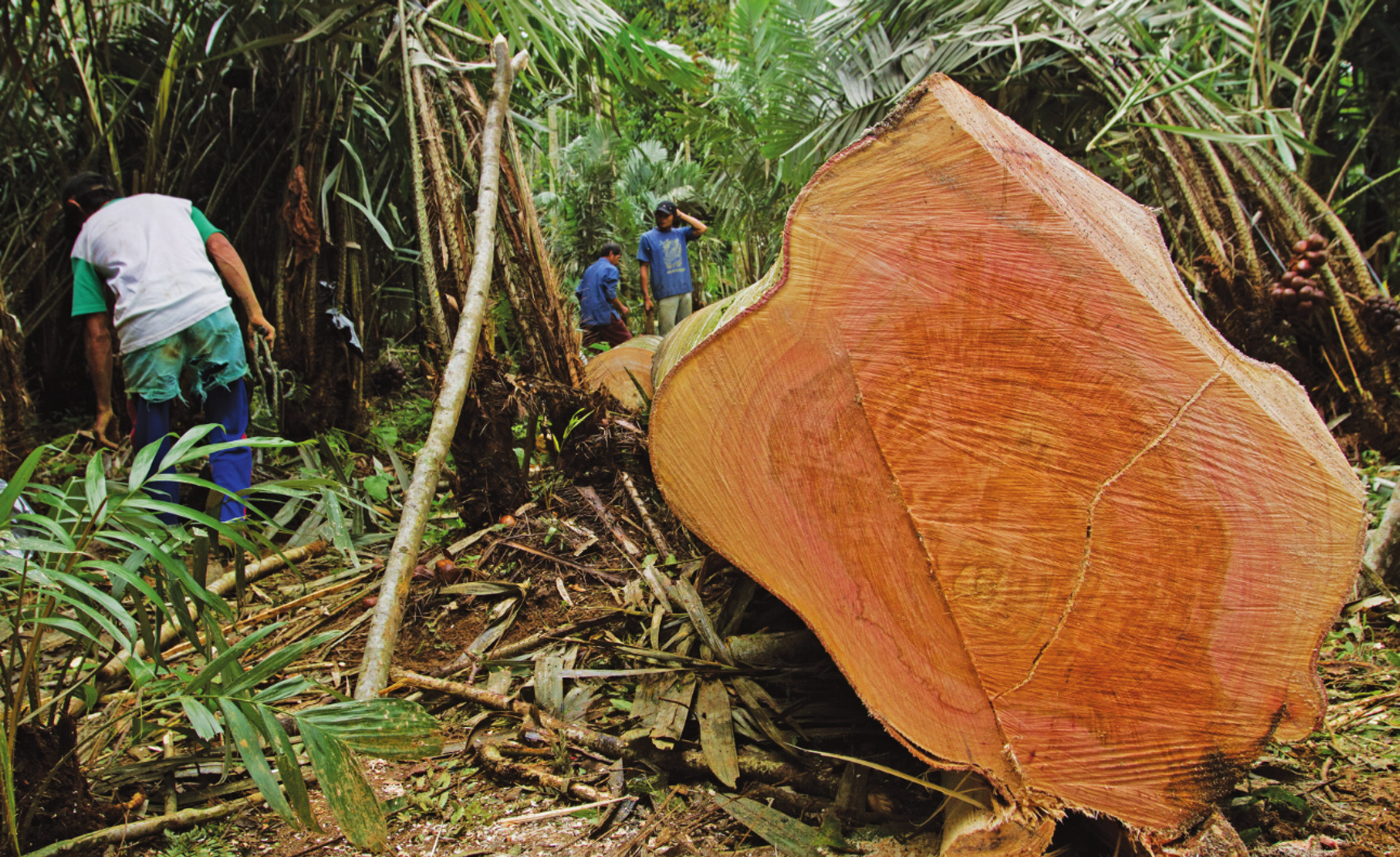 Timber Trade Federation's Conversations about Climate Change competition