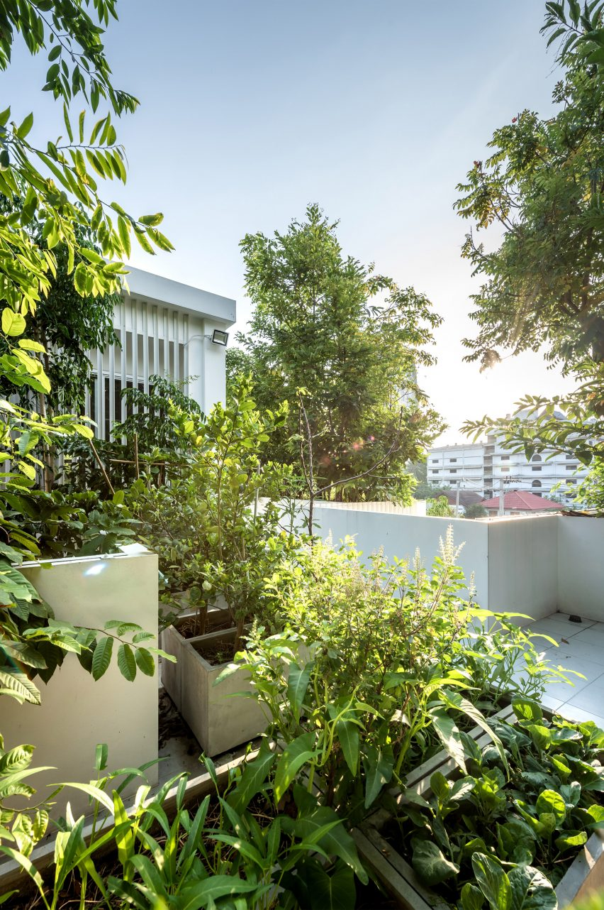 Green roofs of the Forest House in Bangkok