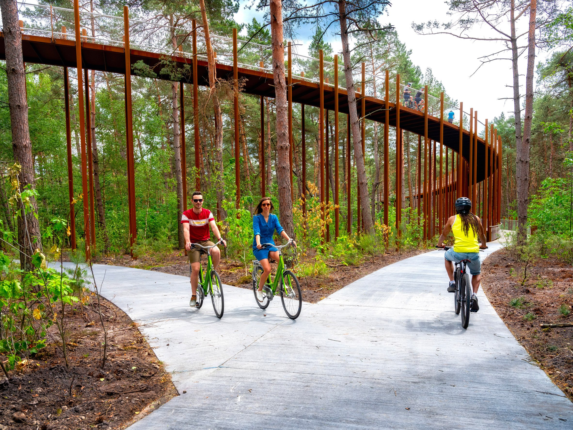 Cycling Through The Trees in Limburg forest