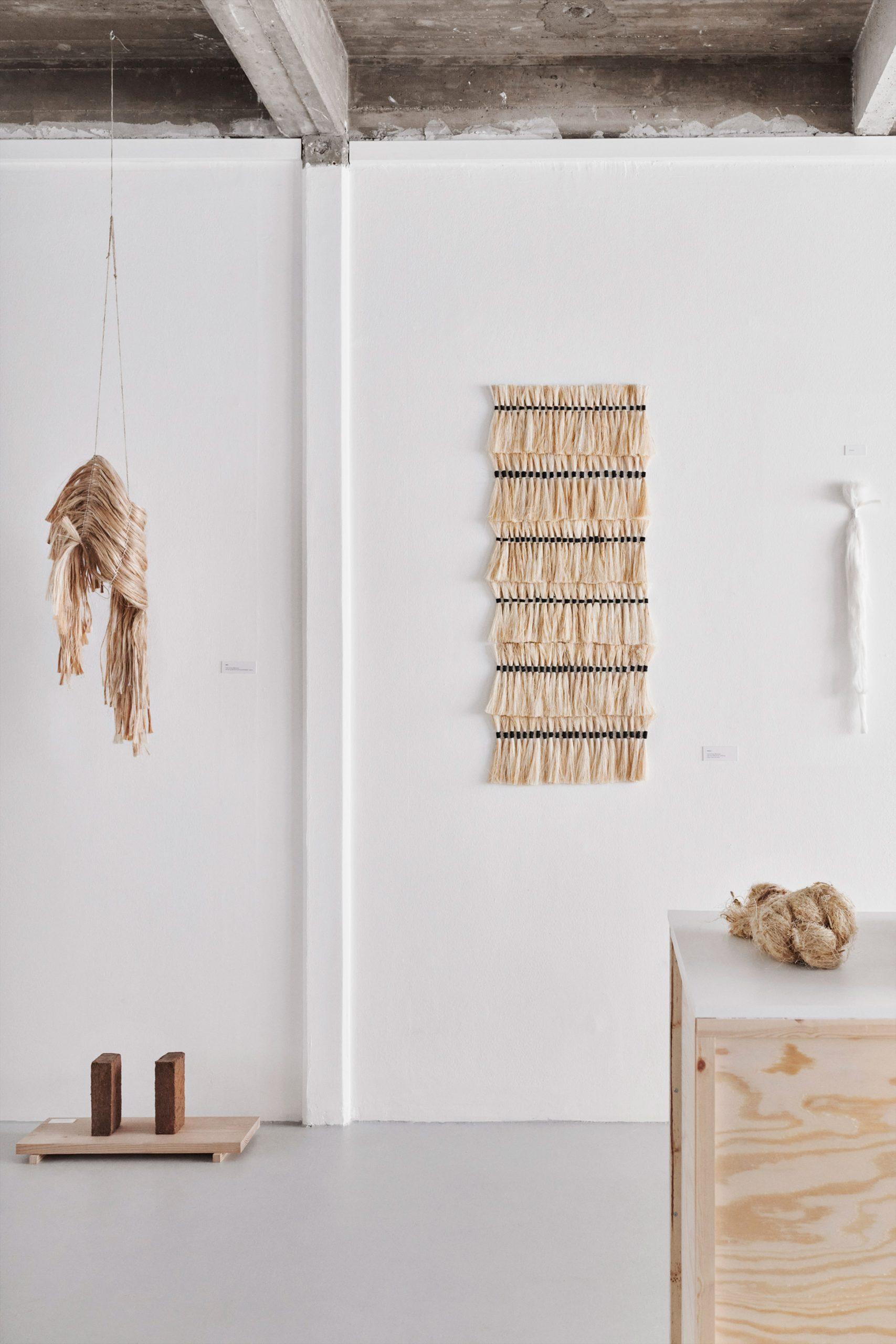 Coconut bricks at Phytophilia by Sara Martinsen