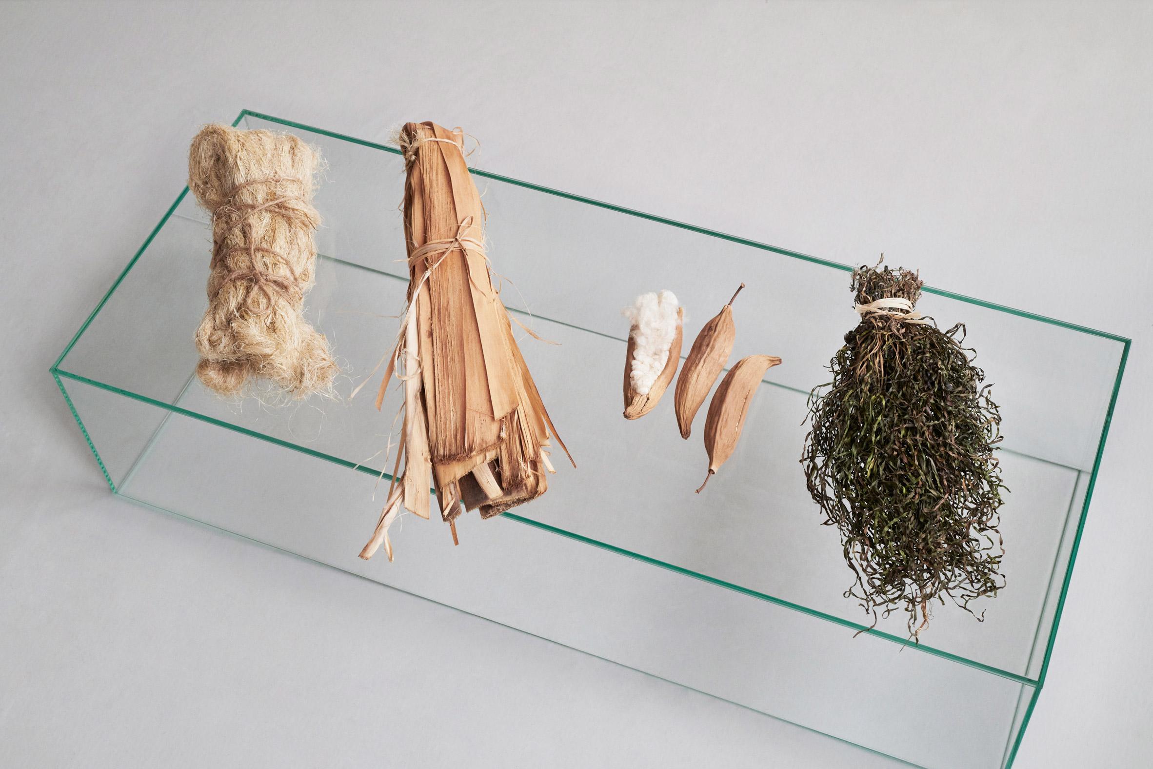 Phytophilia by Sara Martinsen