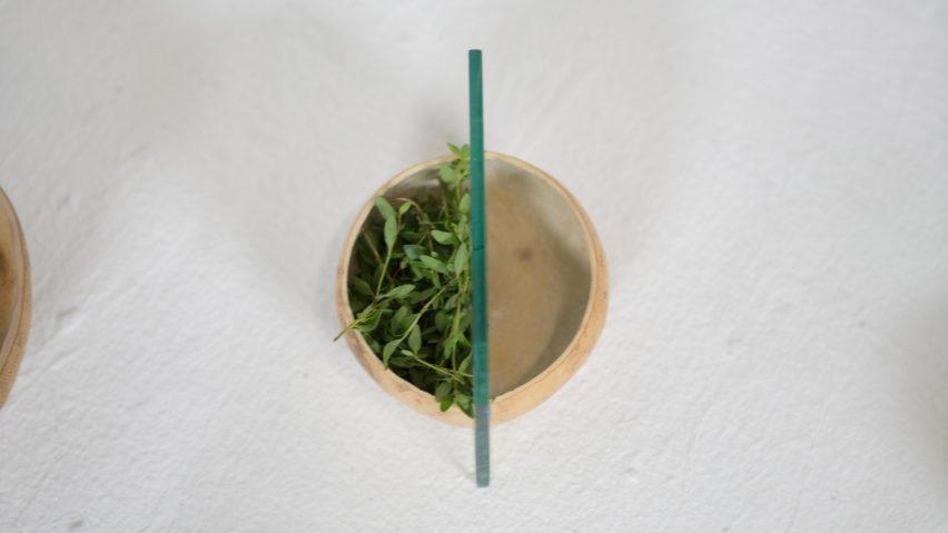 Raiz Noreste Gerardo Osio Cercamiento jicara bowls