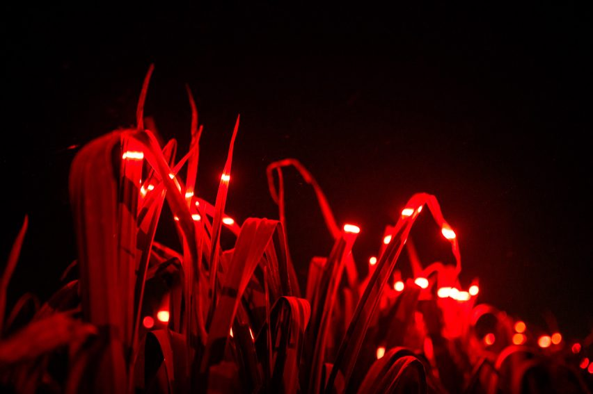 Red light in Grow installation by Studio Roosegaarde