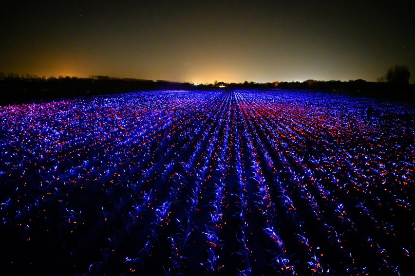 Wide view of Grow installation by Studio Roosegaarde