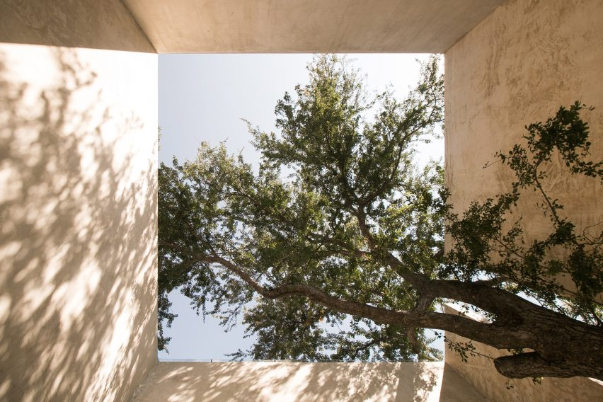 Guamuchil tree growing through a house in Mexico