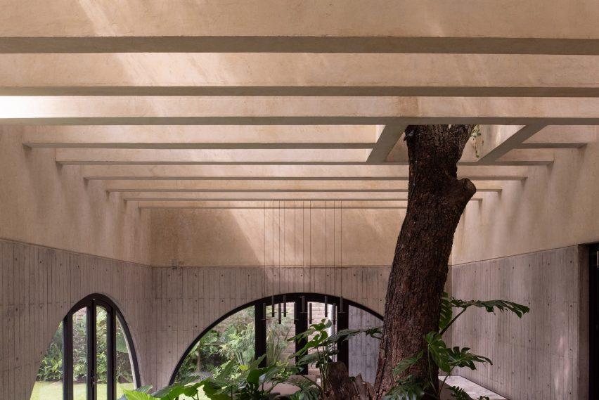 Tree inside Casa Duraznos by V Taller