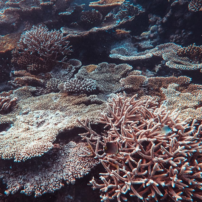 Coral reef in sandy and brown colours