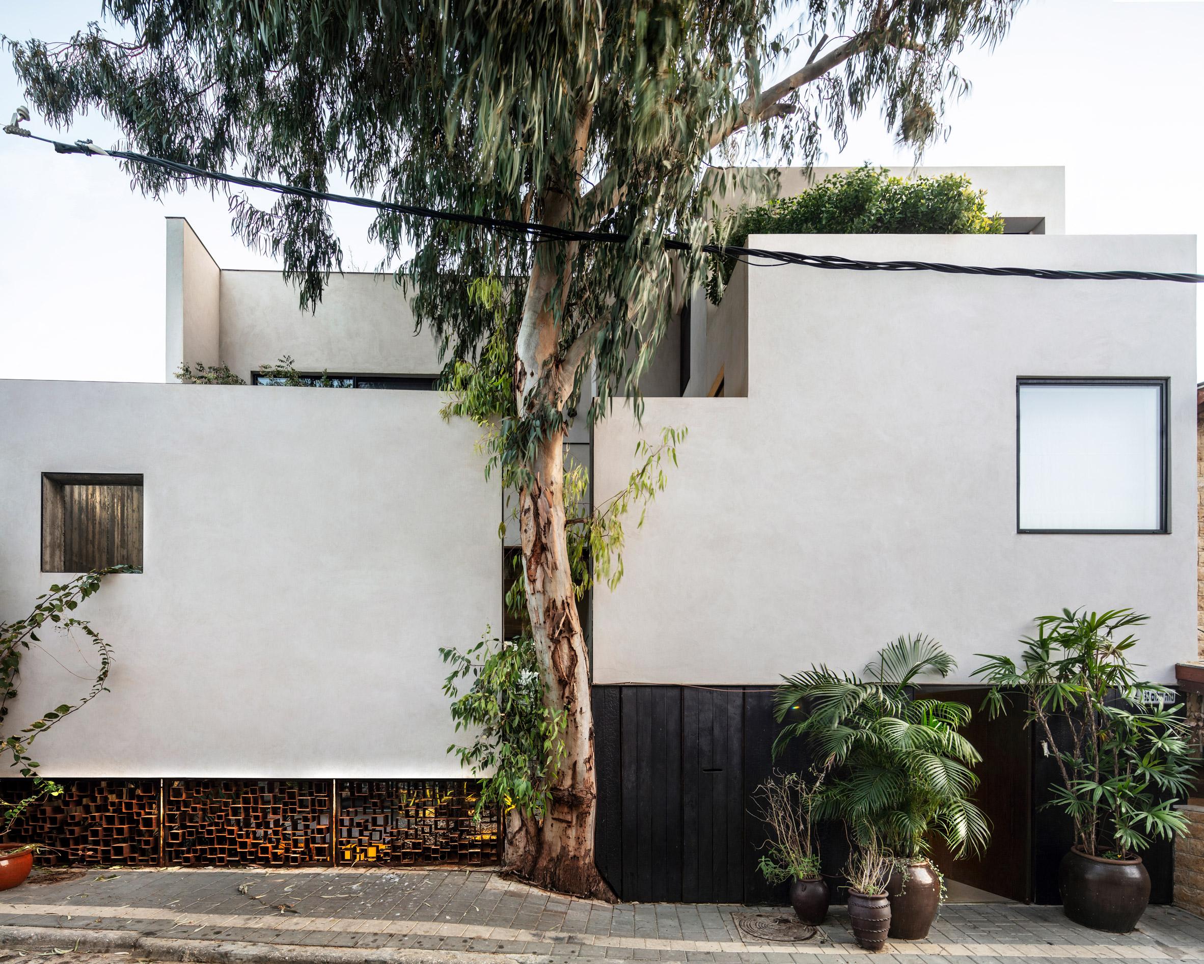 Tree in facade of Eucalyptus House by Paritzki & Liani Architects
