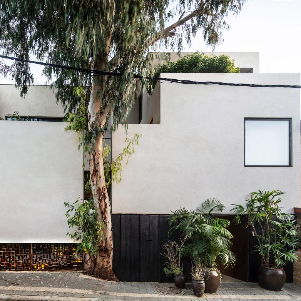 Eucalyptus tree slots into facade of Tel Aviv house by Paritzki & Liani Architects