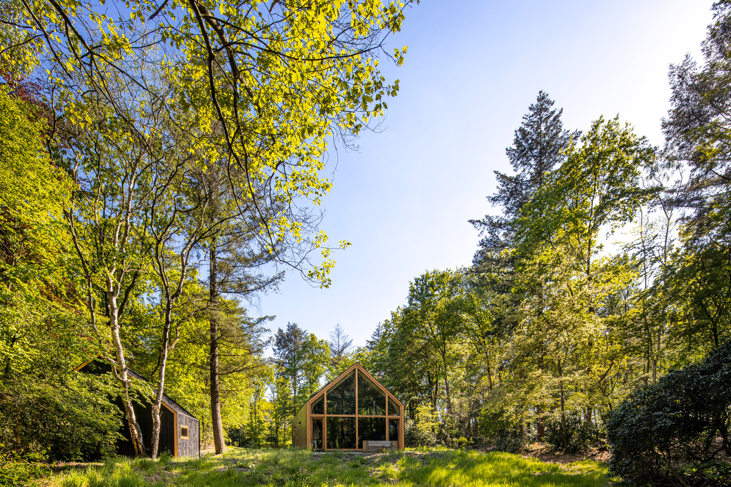 A wooden cabin with glazed walls in a forest opening