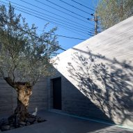 An olive tree at the entrance of the home