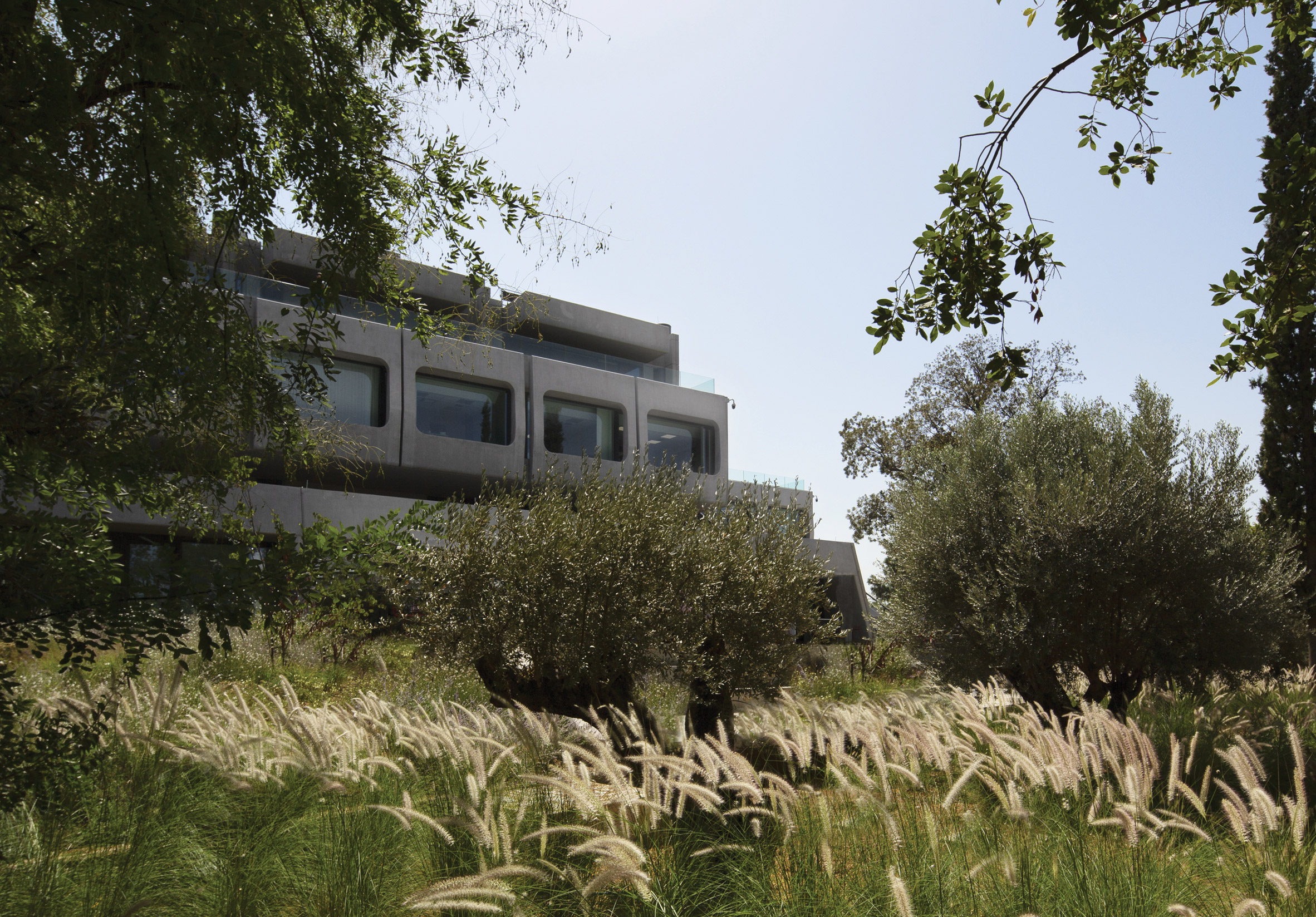 A concrete office in an olive field