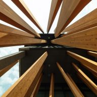 Timber strips seen from below