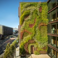 Green wall grows five storeys up San Francisco apartment block