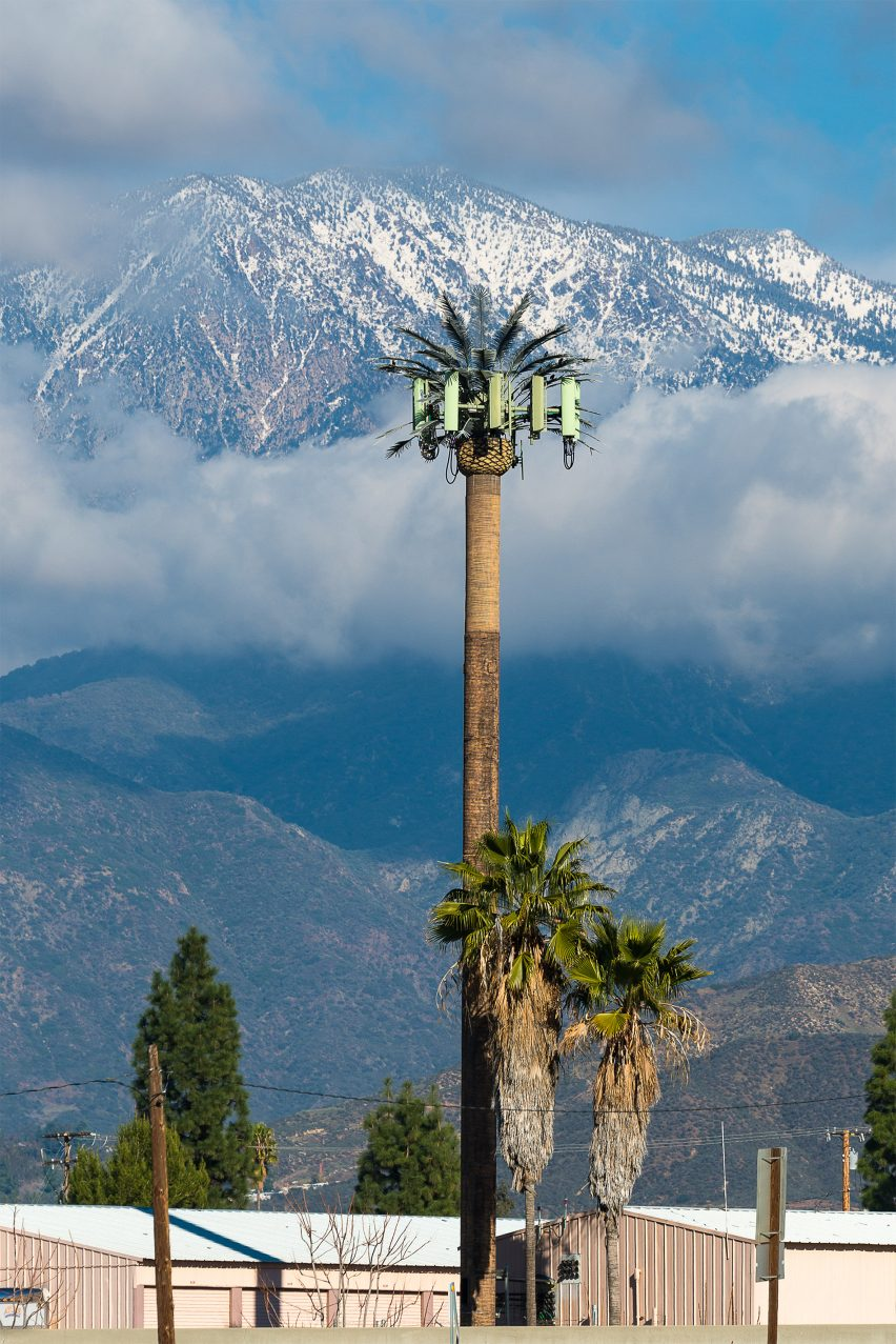 Tall palm tree hiding cell tower technology