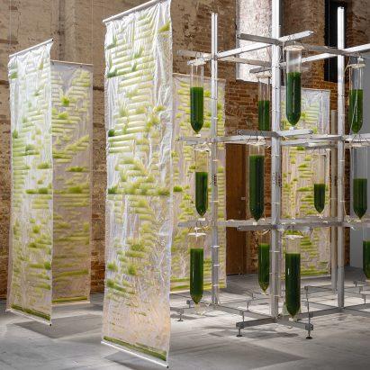 Bit.Bio.Bot algae installation