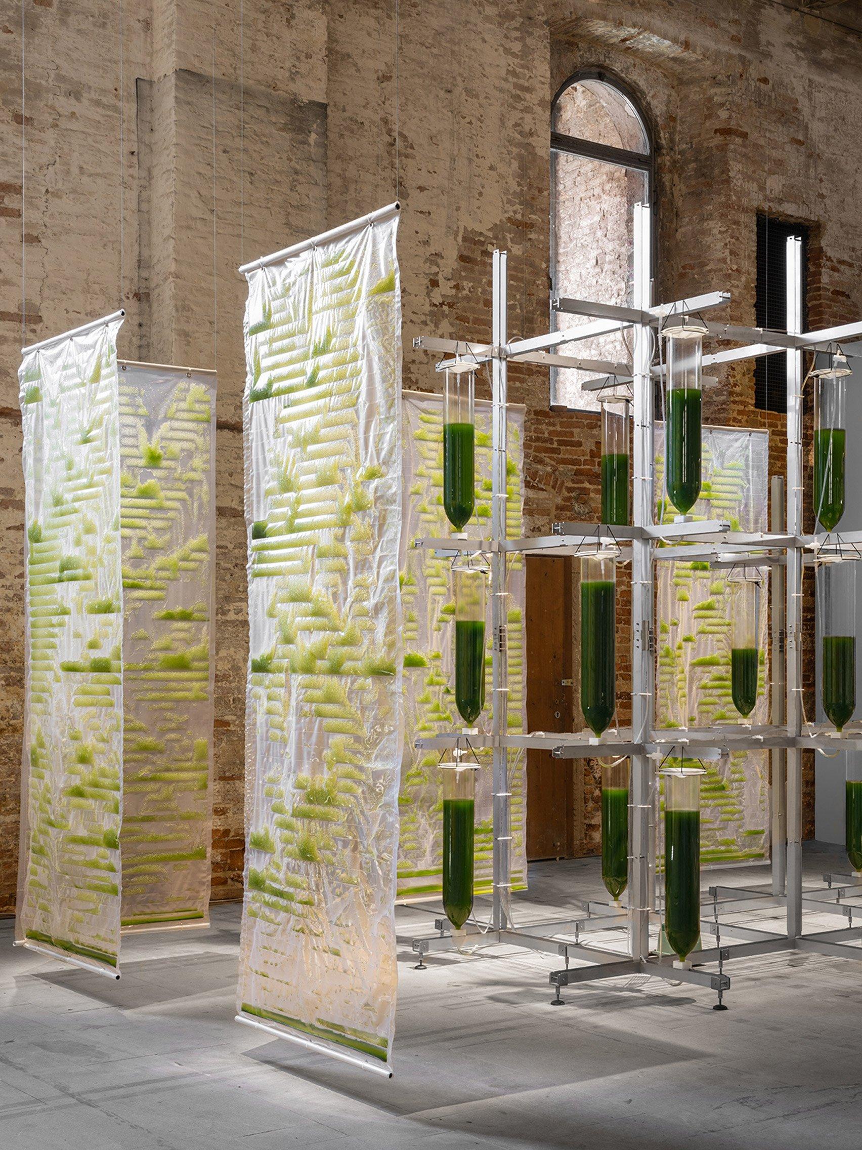 Algae bioreactor sheets and vertical garden installation