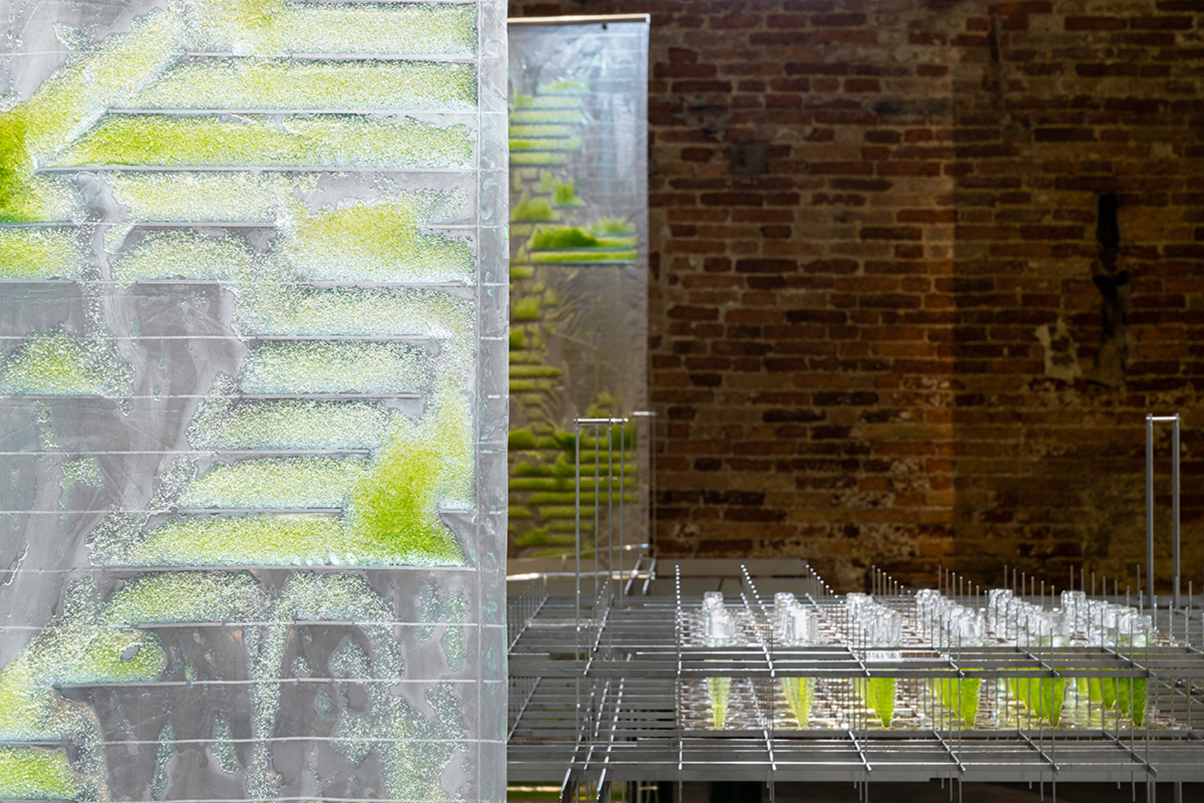 Algae curtains next to steel table