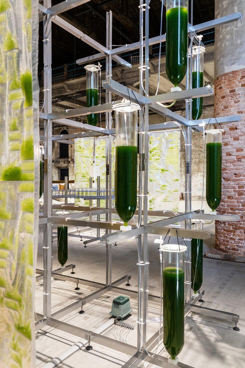 Vertical garden growing algae