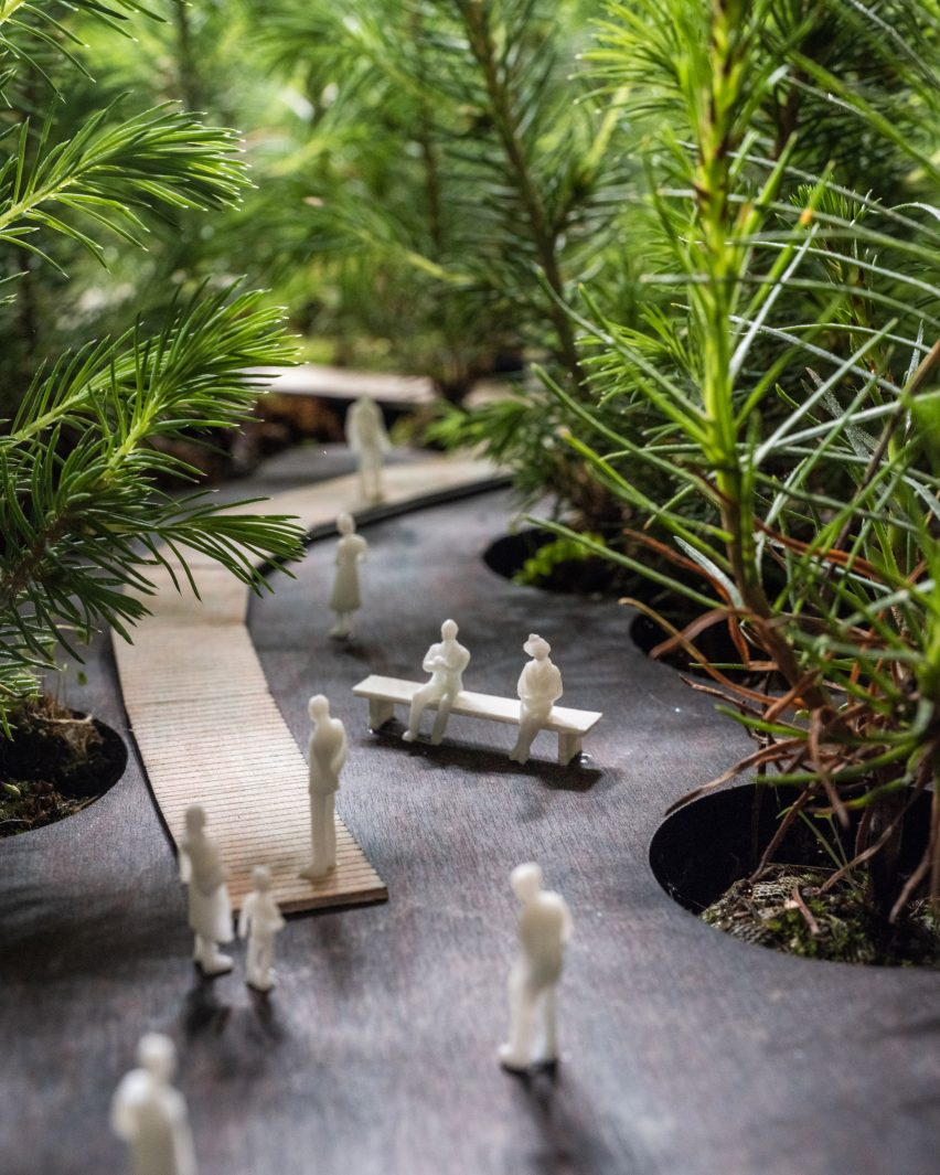 Close up of pine seedlings planted by EFFEKT