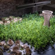 EFFEKT plants 1,200 trees to grow during the Venice Architecture Biennale