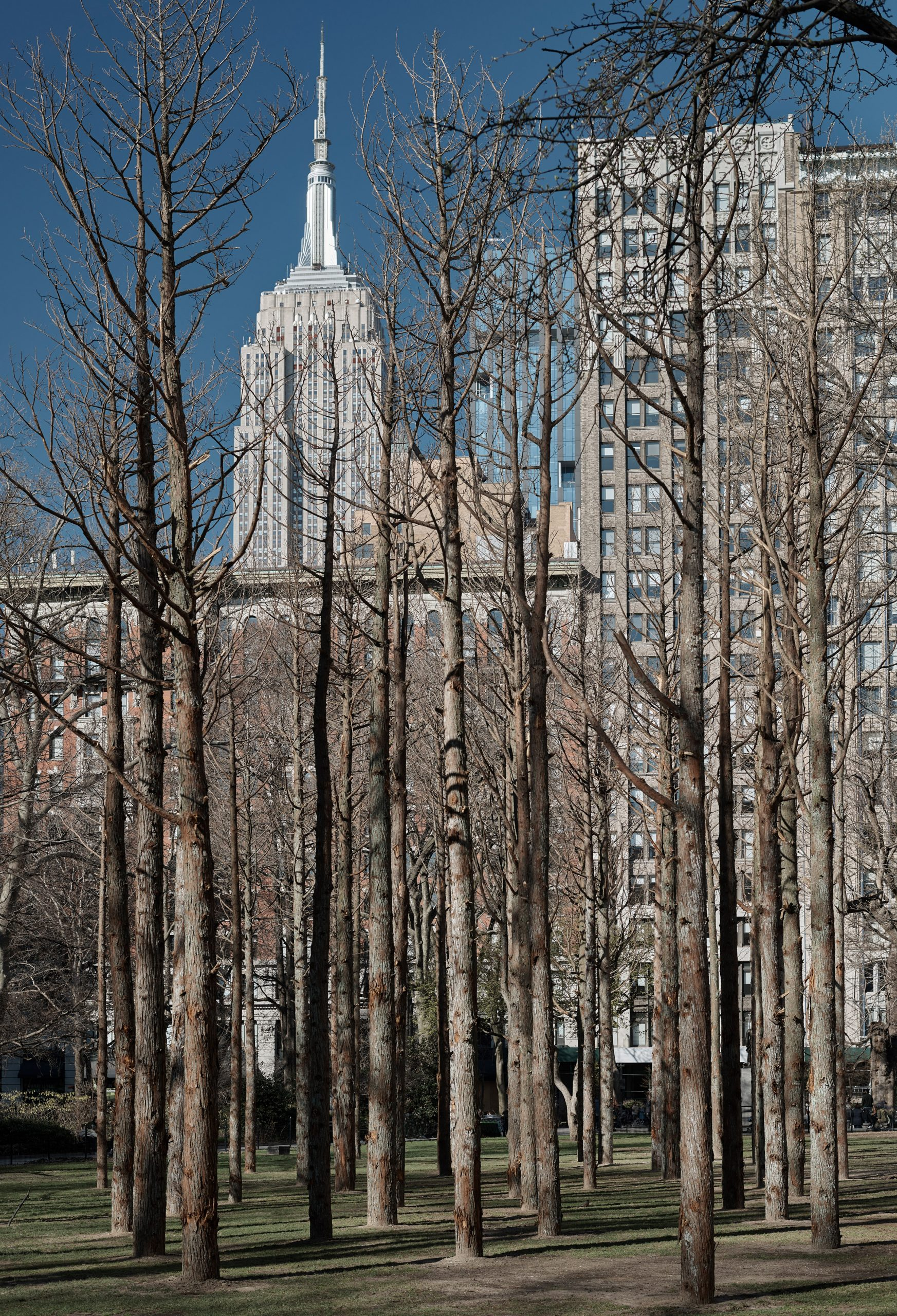 Maya Lin installed the project in Downtown Manhattan