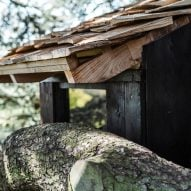 Shingled roof ends above a tree branch