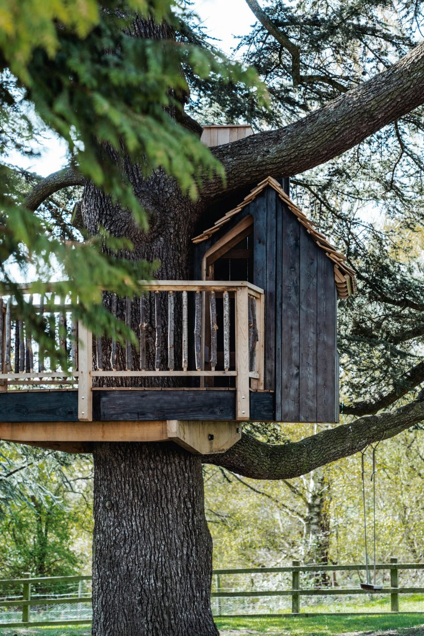 Cedar tree in the English countryside with a treehouse entrance